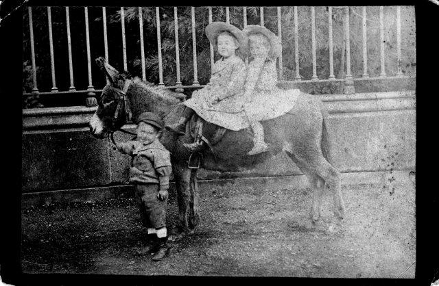 image 2-1892-joe-mimi-moya-donkey-copy-jpg